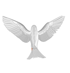 White dove pigeon in flight symbol peace vector