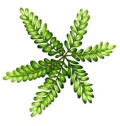 A topview of a fern vector image vector image