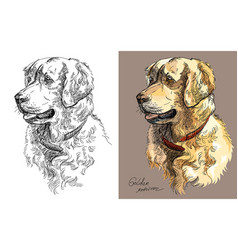 Golden retriever in color and black and white vector