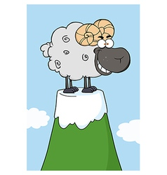 Sheep on a mountain vector image