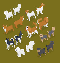 Isometric small dog breeds with jack-russell vector