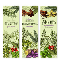banners of spices and herbs for shop vector image vector image