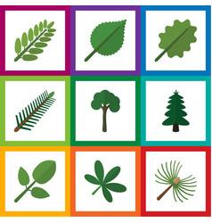 Flat icon natural set of evergreen park alder vector