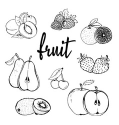 Fruit hand drawn contour vector