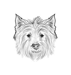 Sketch west highland white terrier Hand drawn vector image
