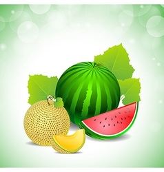 Melon and watermelon vector