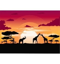 African sunset in the savannah vector