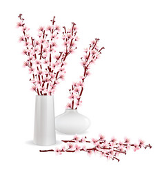 cherry blossom branches in vase vector image vector image