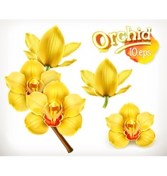 Orchid flowers icon set vector