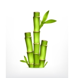 Stem of bamboo vector