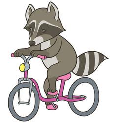 Cute cartoon raccoon riding a bicycle vector