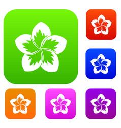 Frangipani flower set collection vector
