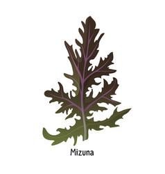 Mizuna kyona japanese greens or spider mustard vector