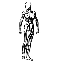 Human body anatomy woman vector