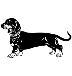 Dachshund black white vector
