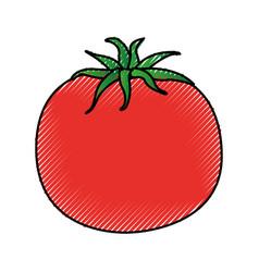 tomato fresh vegetable icon vector image