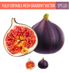 Figs on white background vector