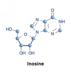 Inosine in trna vector