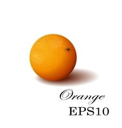 Orange on a white background vector image