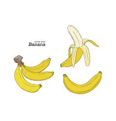 set of banana hand draw sketch vector image vector image