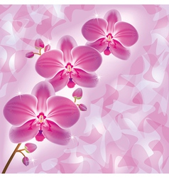 Invitation or greeting card with orchid in grunge vector
