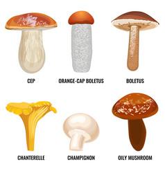 Set of funguses or mushrooms vector