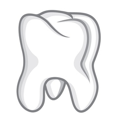 Tooth isolate on white vector