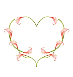 Beautiful red anthurium flowers in heart shape vector