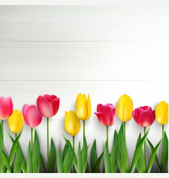 Colorful tulips on white wooden table vector
