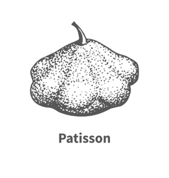 Hand-drawn patisson vector