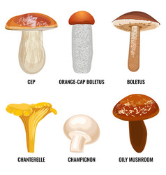 set of funguses or mushrooms vector image