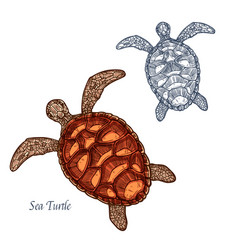 Sea turtle isolated sketch icon vector