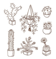 Set of various houseplants vector image
