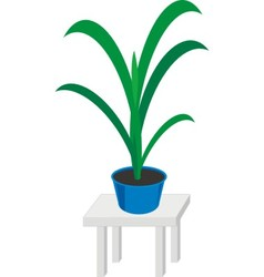 Home plants in pot vector