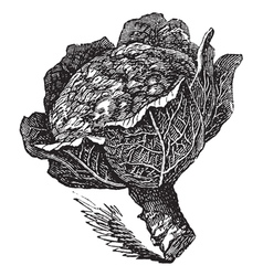 Broccoli vintage engraving vector