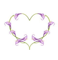 Beautiful violet anthurium flowers in heart shape vector