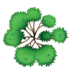 A topview of a tree vector image