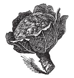 Broccoli vintage engraving vector image vector image