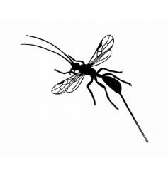 braconid wasp vector image