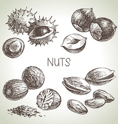 Hand drawn sketch nuts set of eco food vector