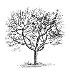ink sketch of dry tree vector image