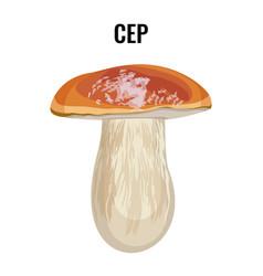 Cep fungus boletus edulis penny bun cep porcino vector