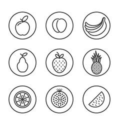 Fruit Flat design thin line icon set vector image vector image