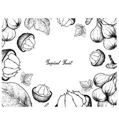 Hand drawn frame of sweet ripe santol and cluster vector