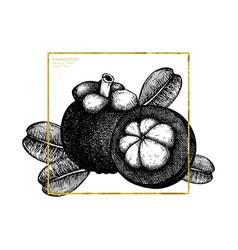 purple mangosteen fruit vector image vector image