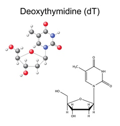 Chemical formula and model of deoxythymidine vector