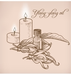 Ylang-ylang essential oil and candles vector