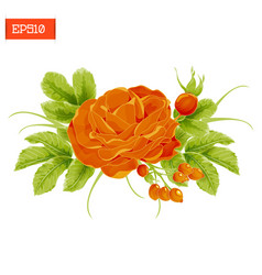 Floral composition orange rose flower with leaves vector