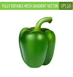 Green pepper on white background vector