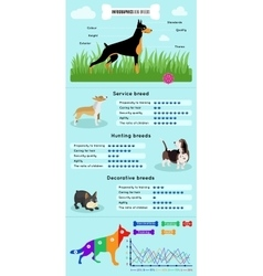 Dogs breed infographics vector